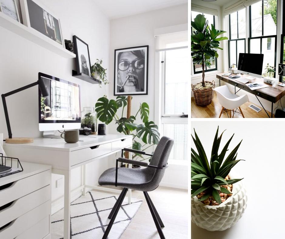 5 Best Desk Plants